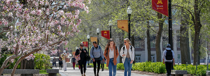 Students walk on Northrop Mall past a flowering tree